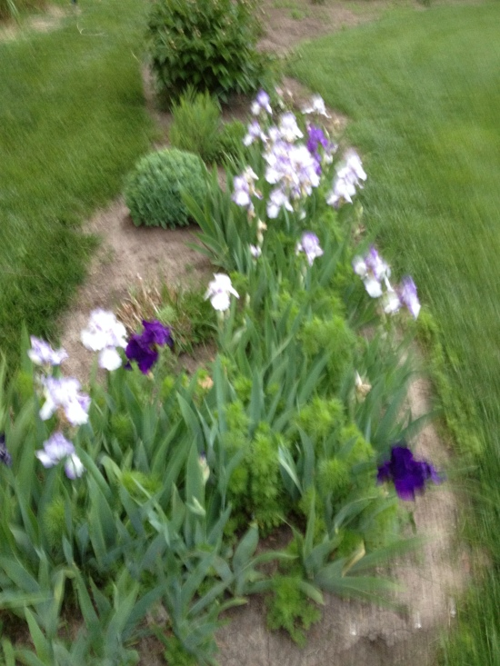 A small part of Joan's flower garden.  It is sparse now as spring comes late in the high plains. Give it another month.