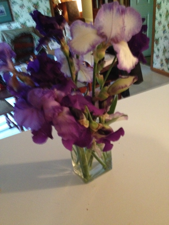 First batch of flowers from Joan's garden. Many more to come.