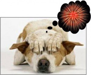 Photo credit: Courtesy Tampa Bay Humane Society.  See also 5 tips to help your pets during the Fourth of July fireworks
