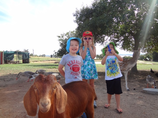 Milan, Petra and Fletcher celebrate the Chinese year of the goat in Australia.